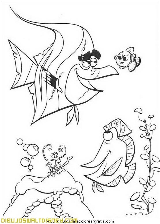 Nemo con peces amigos