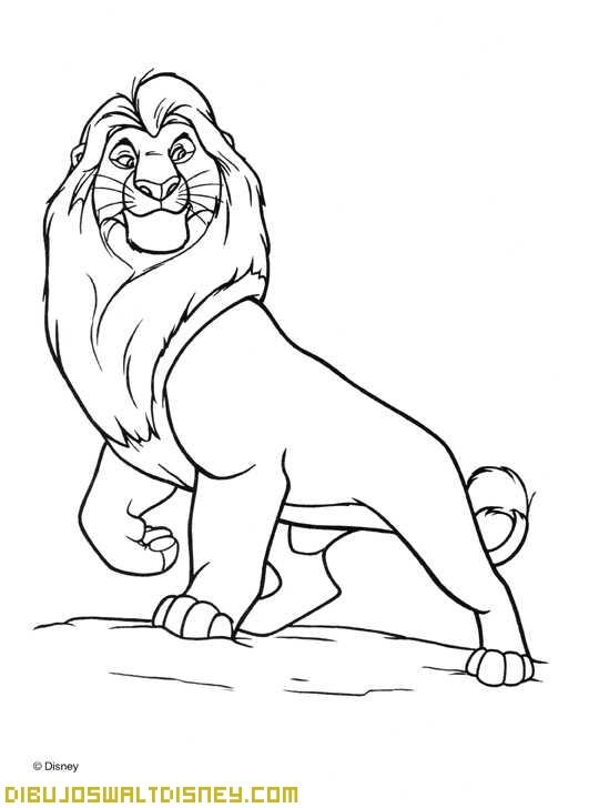 Mirada del Rey León