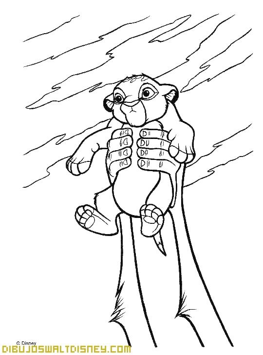 Ha nacido un Rey León